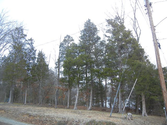 Land for Sale, ListingId:26605641, location: 0 Pine Road Halifax 24558